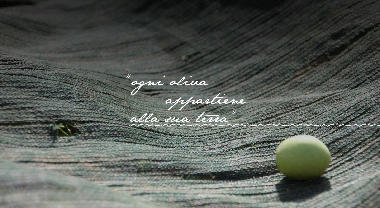 slide-ogni-oliva-appartiene-alla-sua-terra