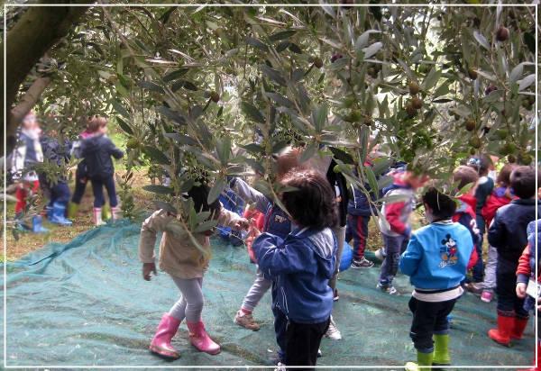 visita scuola - Azienda Agricola Oliva