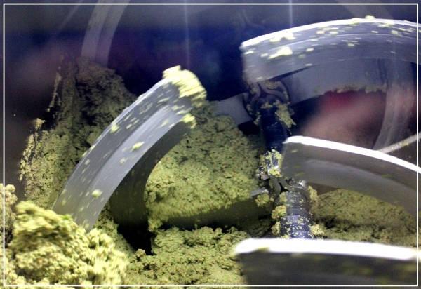 lavorazione delle olive - Azienda Agricola Oliva